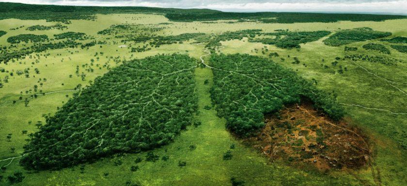 возмещение вреда природе